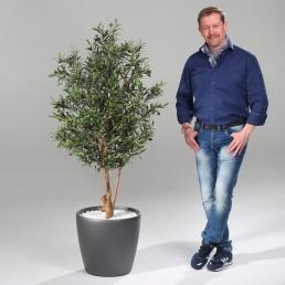 kago hammerschmidt Pflanzenarrangement Olivenbaum