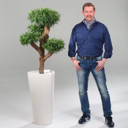 kago hammerschmidt Pflanzenarrangement Poducarpus