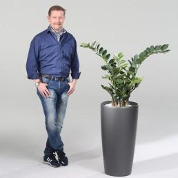 kago hammerschmidt Pflanzenarrangement Smaragd