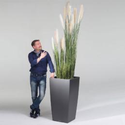 kago hammerschmidt Pflanzenarrangement  Reed Grass