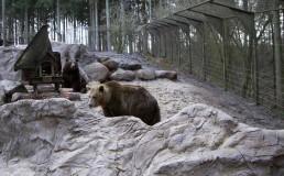 kago hammerschmidt kunstfelsen 02 wildpark