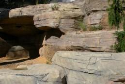 kago hammerschmidt kunstfelsen 10 zoo bern