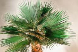 kago hammerschmidt palmen baum 021