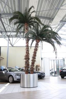 kago hammerschmidt palmen baum 022 autohaus