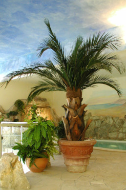 kago hammerschmidt palmen baum 023 stadtbad