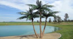 kago hammerschmidt palmen baum 09