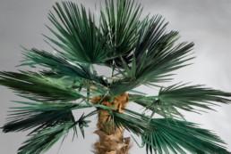 kago hammerschmidt palmen baum 10