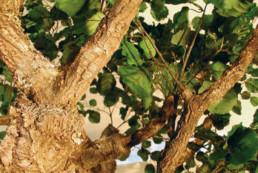 kago hammerschmidt palmen baum 12