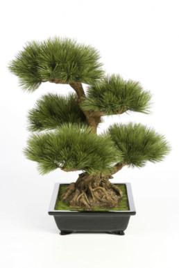 kago hammerschmidt palmen baum 15