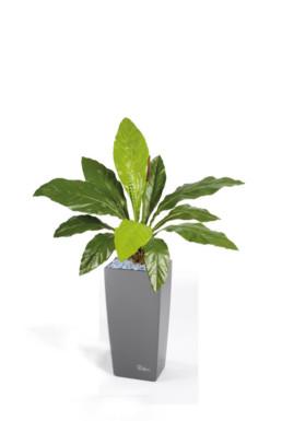 kago hammerschmidt textilpflanzen 10