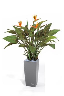 kago hammerschmidt textilpflanzen 11