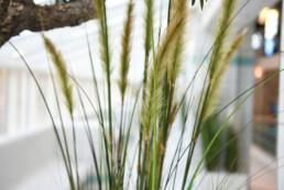 kago hammerschmidt textilpflanzen graeser 07