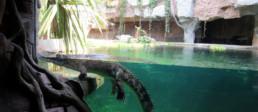 kago hammerschmidt zoo chester 00
