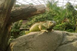 kago hammerschmidt zoo leipzig 07