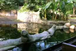 kago hammerschmidt zoo leipzig 09