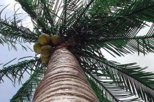 Leistungen Palmen Bäume