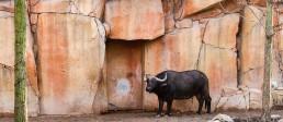 kago referenzen zoo antwerpen 1
