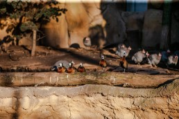 kago referenzen zoo antwerpen 6